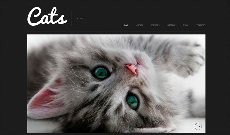 cat-wordpress-themes