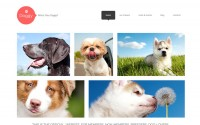 dog-bootstrap-wordpress-theme