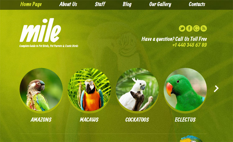 exotic-birds-blog-wordpress-theme